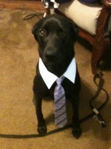 dog in a tie2