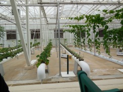 Hydroponic stuff - very cool